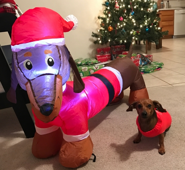 Sage Weenie at Christmas