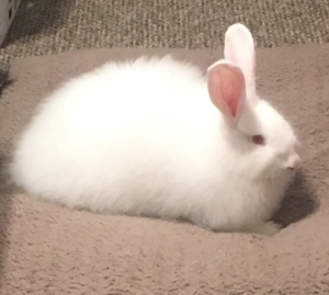 White-bunny-with-pink-ears-and-eyes